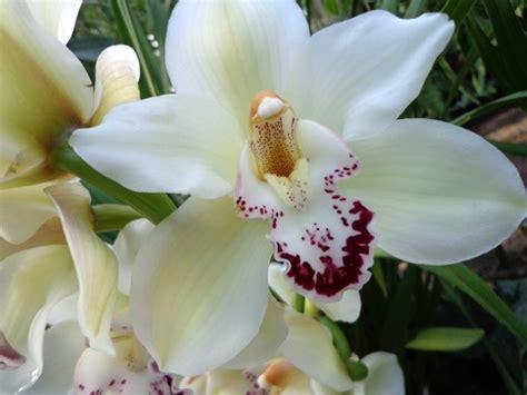 orchidea in vaso cura come avviene la riproduzione nelle orchidee cura