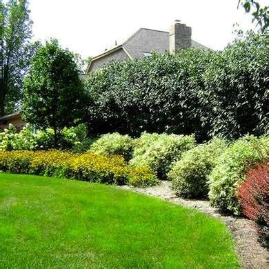 12 Expert Tips For Eye Catching Front Yard Landscaping Backyard Privacy Landscaping Ideas