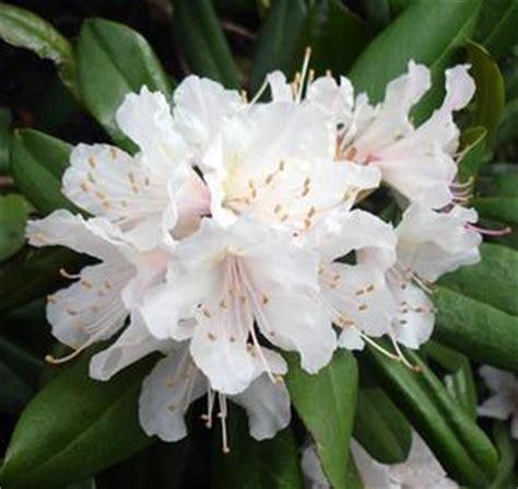fiori velenosi velenosi fiori comuni russelmobley