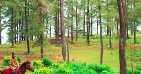 Tenteng Kacang Tanah Tenteng Khas Sulawesi wisata sulawesi selatan malino hutan wisata