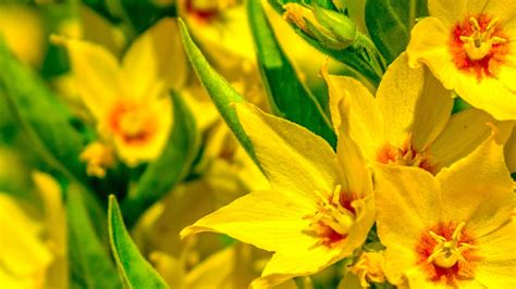 immagini di fiori per desktop sfondi hd desktop fiori 86 immagini