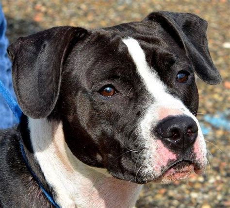 athens county shelter urgent 24 dogs need a loving home the athens county shelter oh usa 18 of