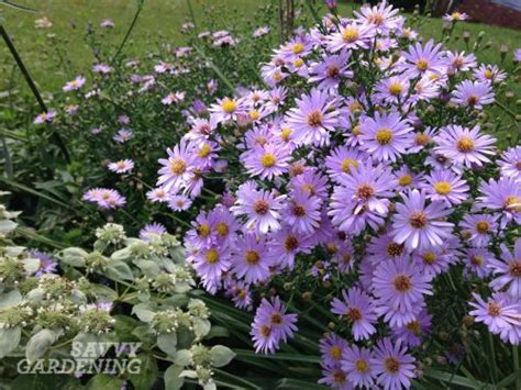 5 late blooming pollinator friendly plants