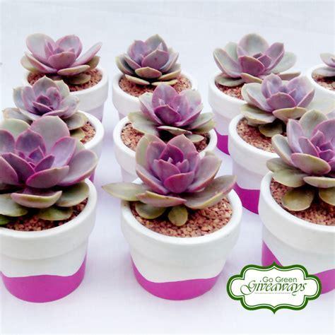 Echeveria Perle von Nurnberg succulents wedding souvenirs