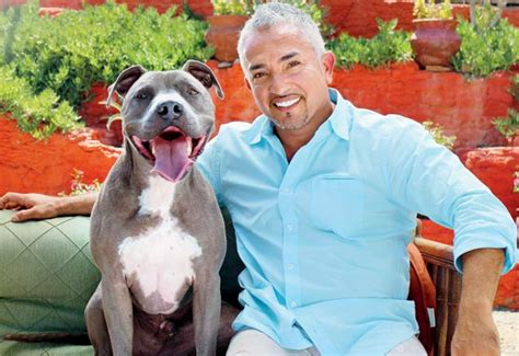 cesar millan puppy whisperer cesar millan s junior a pit bull who breeds picture