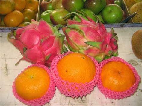 Benihbibitbiji Buah Jeruk Ponkam parcel buah untuk eyang tercinta di cigadung 2 toko buah bandung