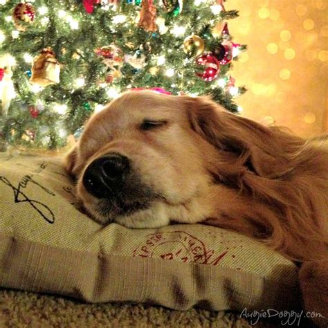 245 best christmas with critters images on pinterest