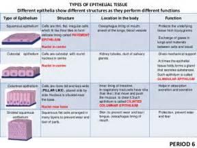 tissues class 9 ppt