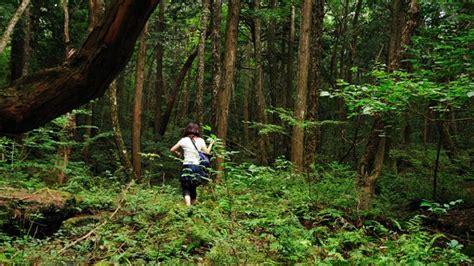 bosque aokigahara el bosque de los suicidios malditos aokigahara el bosque del suicidio de jap 243 n que inspir 243 una pel 237 cula notiforo