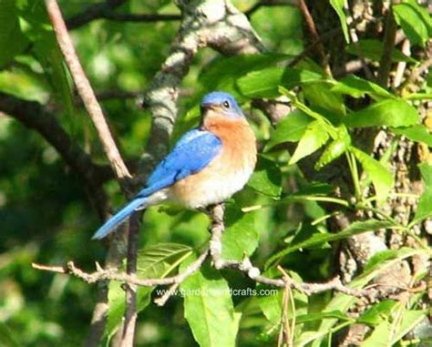 attract bluebirds your backyard 42 best birds attracting them to the yard images on pinterest