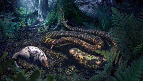 when did new year start in australia as 237 eran las primeras serpientes hace 128 millones de a 241 os