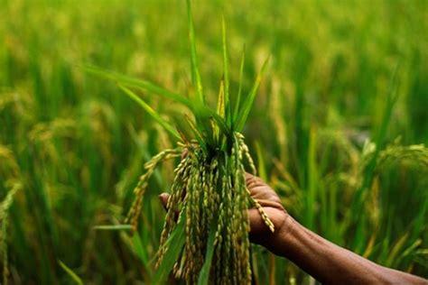 rabi bank both rabi kharif crops hit by monsoon vagaries rbi the