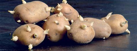 alimenti irradiati alimenti irradiati sono sicuri ecco i trattamenti a cui
