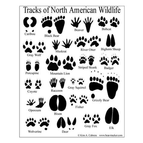 printable animal tracks flashcards 7 best images of animal tracks printable cards animal