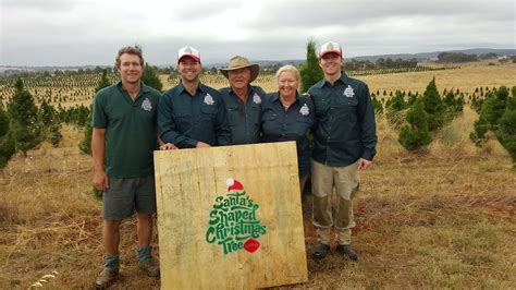 100 christmas tree farm canberra willow farm berry