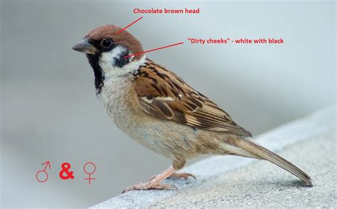 the difference between houses and trees sparrows my