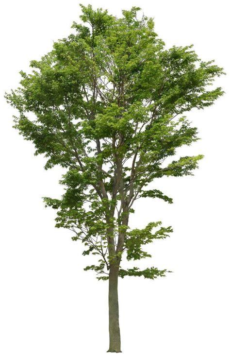 pin by sharika jacobs on quickweaves pinterest pin tillagd av jacob brobeck p 229 vegetation pinterest