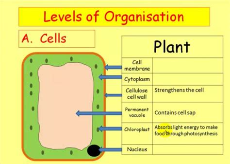 biological themes in film class home igcse science courses