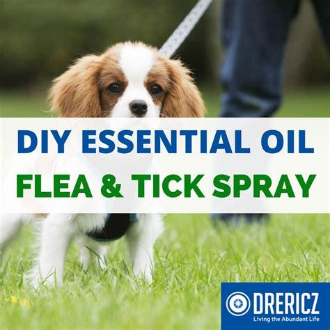 essential oils for fleas on dogs flea spray for dogs essential oils