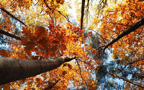 imagenes otoño en mi corazon im 225 genes de oto 241 o aion mx