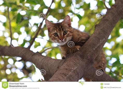 Cat On by Cat On Tree Stock Photography Image 17865882