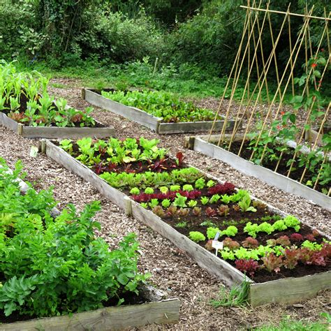 small year veg patch rocket gardens