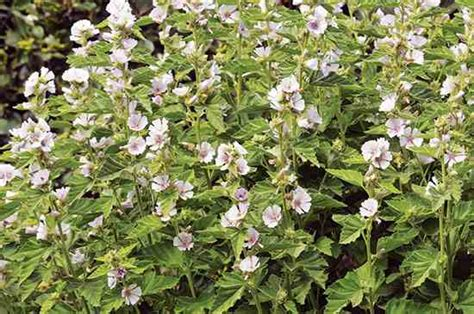 Gardenia Growing Conditions Best Medicinal Herbs For Difficult Growing Conditions