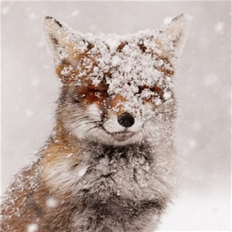 animals in the winter real animals pose with humans in mystical photographs by
