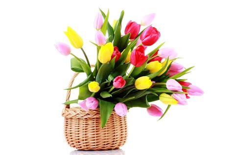 imagenes de flores de cempasúchil flores gratis imagui