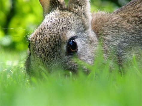 coniglio da appartamento piante velenose per conigli il viaggio continua