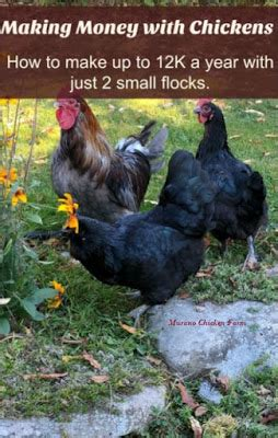 money with chickens how to make up to 12k a year with just 15 chickens books money with chickens murano chicken farm