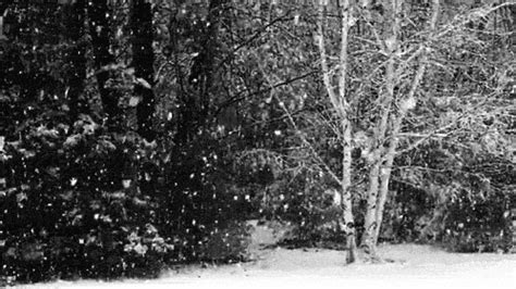 imagenes gif nevando snow gif find share on giphy
