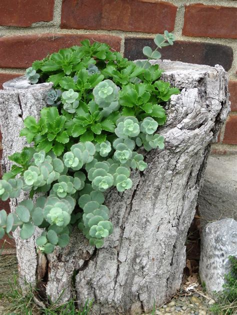 12 old tree stumps turned into beautiful flower planters