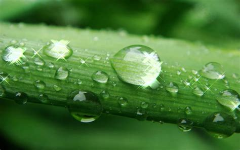 amazing water drops wallpapers