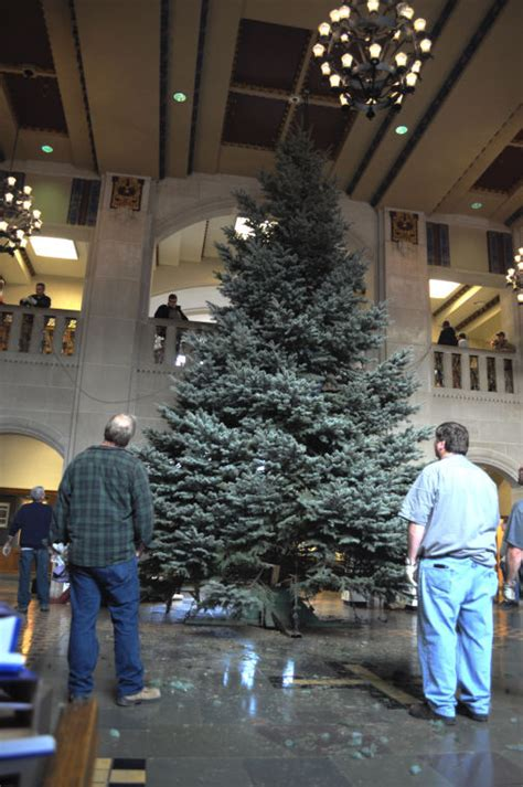 30 foot christmas tree brings color to memorial union