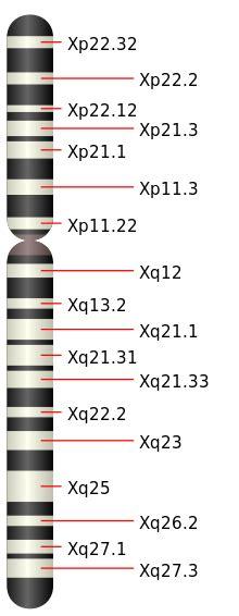 chromosome y supplementaire chromosome x wikimonde