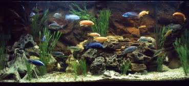 cichlids.com: Tank examples: 120 Gallon Cichlid Haven