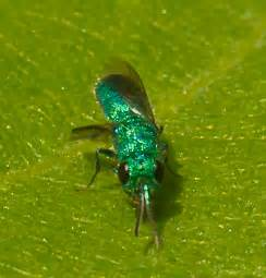 blue fly by ii bright blue flying insect related keywords bright blue