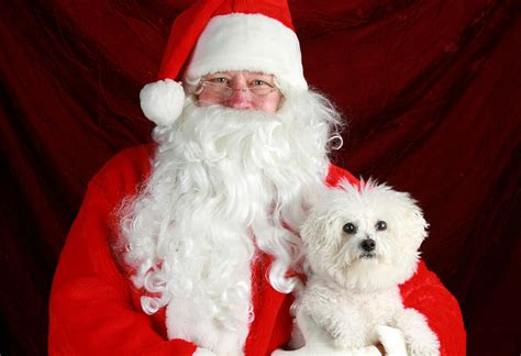 precious friends puppy rescue clarksville tn precious friends puppy rescue to host photos with santa clarksvillenow