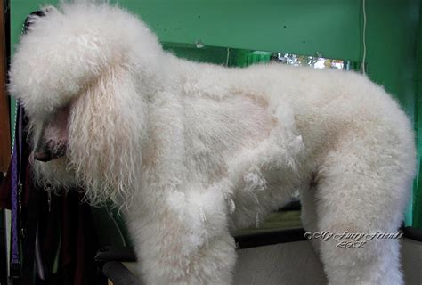 How To Shave A Matted by Pet Grooming The The Bad The Bathing And