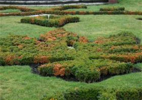 Massenhaft Pilze Im Garten by Buchsbaum Krankheiten Heckenersatz Krankheit Krank