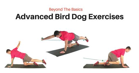 bird exercise advanced bird exercise progressions