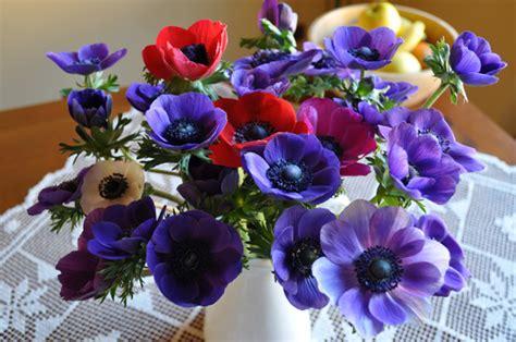 cing villaggio dei fiori prezzi dei fiori prato in pieno dei fiori fotografia