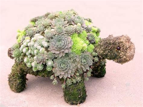 how to make a succulent turtle turtle topiary from simplysucculents com garden yard