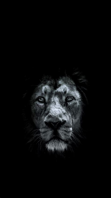 iphone wallpaper hd lion lion 1080 x 1920 hd wallpaper