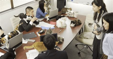 when cats outnumber in the office