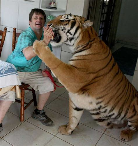 Top 10 Most Dangerous Animals by Top 10 Most Dangerous Animals That Keep As Pets