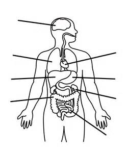 Outline Of The Human Parts human outline printable cliparts co