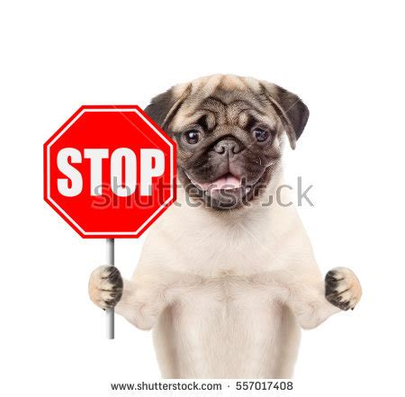 puppy stopped stock images royalty free images vectors