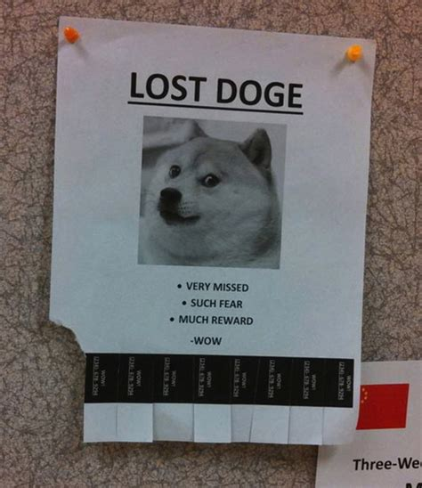 Lost Doge Meme - named it virginity and then lost it justpost virtually